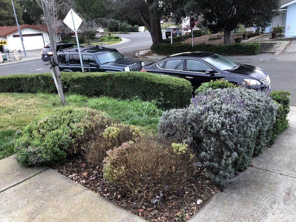 Jose's Gardening: Vallejo, CA