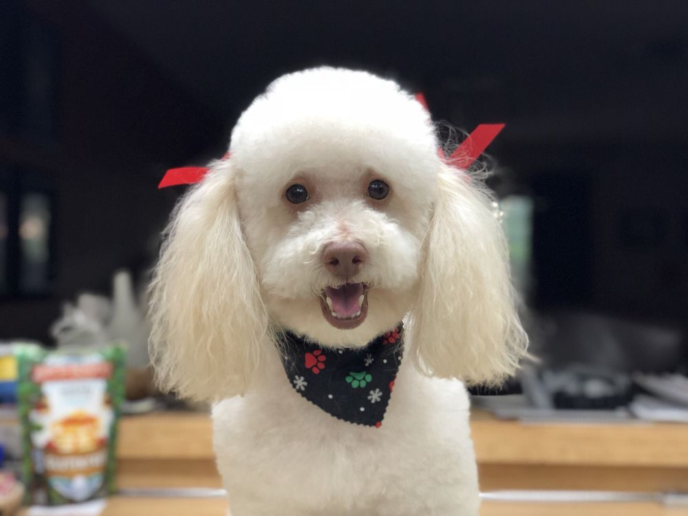Ace Dog Grooming & Pet Supplies