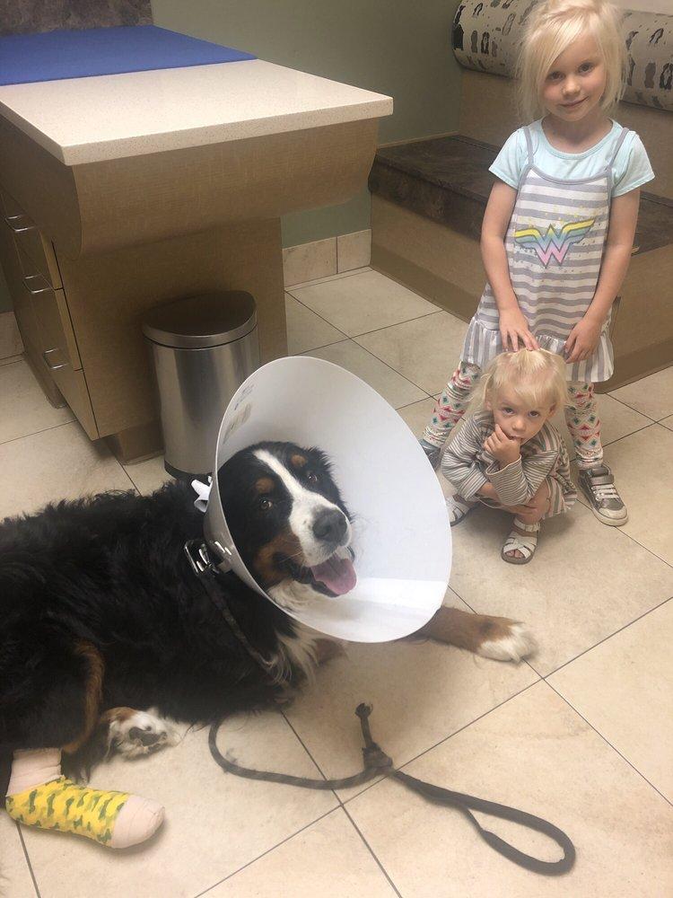 Mesa Veterinary Hospital PC: 2525 Youngfield St, Golden, CO