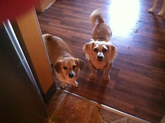 Dinky Dogs Rescue Request A Quote Pet Services 5607 Mountain