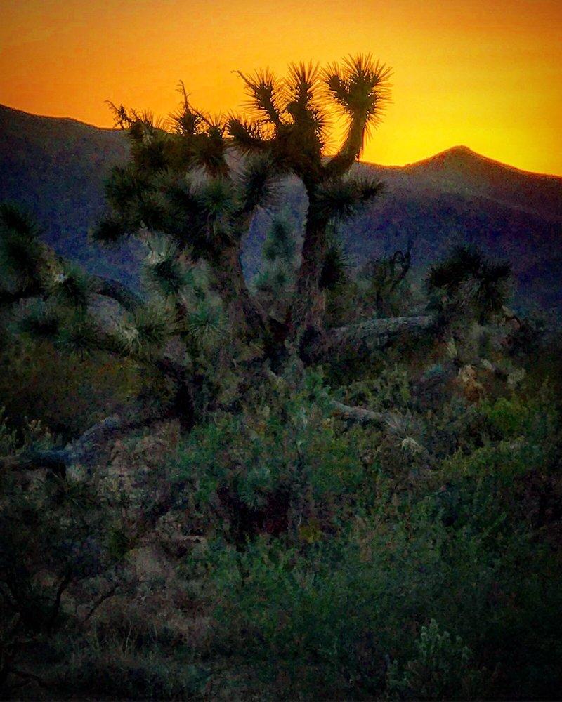 Joshua Tree National Forest: Joshua Tree Pkwy, Congress, AZ