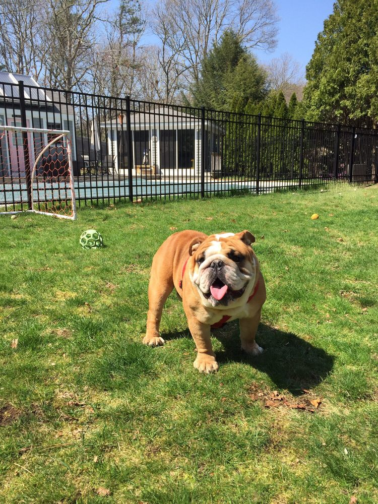 Ultimate Bulldog's: Richmond, VA