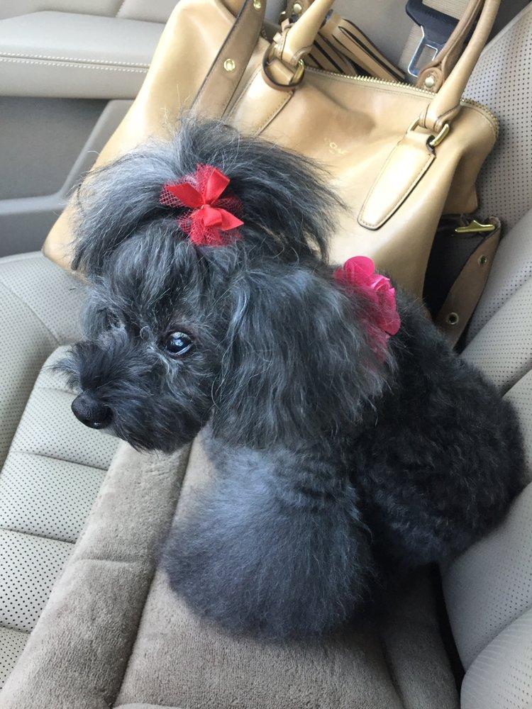 Elite Pet Spa & Boutique