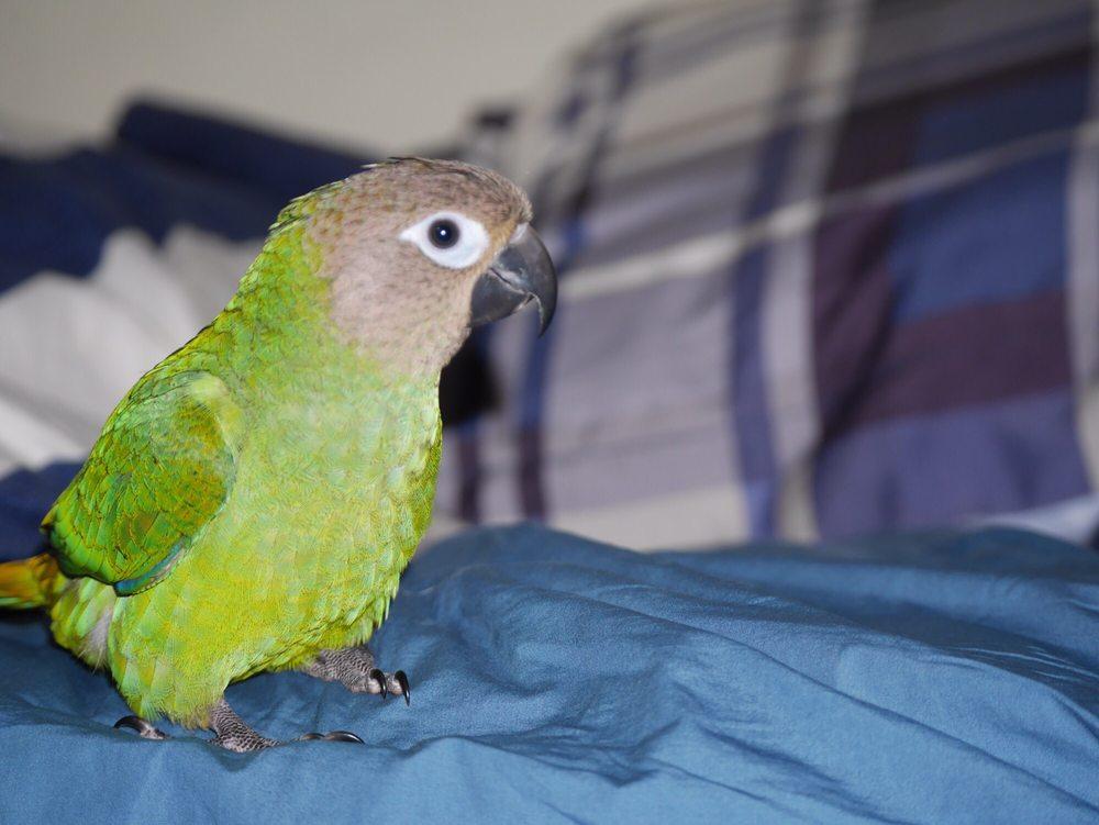 Canoga Discount Birds - 85 Photos & 102 Reviews - Pet Stores
