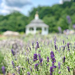 Lavender Pond Farm - 64 Photos & 21 Reviews - Flowers