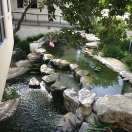 Westlake medical center 11 photos 32 avis cliniques for Fish pond surgery center