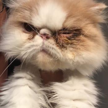 PetSmart - (New) 14 Reviews - Pet Training - 4810 First Ave