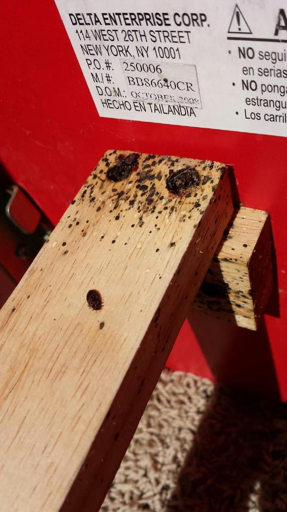 Bed Bugs And Feces Found On Wooden Bed Frame Yelp