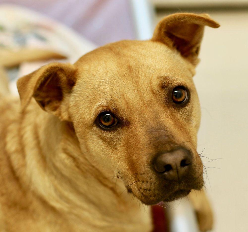 Photo of Agape Pet Services of North Carolina: Siler City, NC