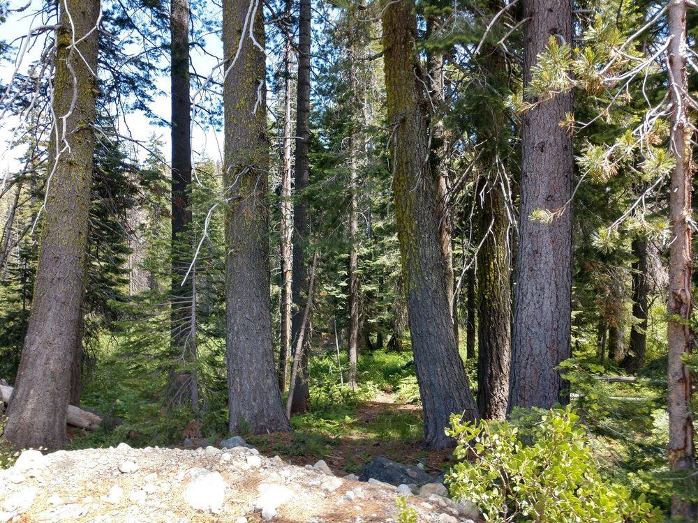 Castle Lake Campground: 204 West Alma, Mount Shasta, CA
