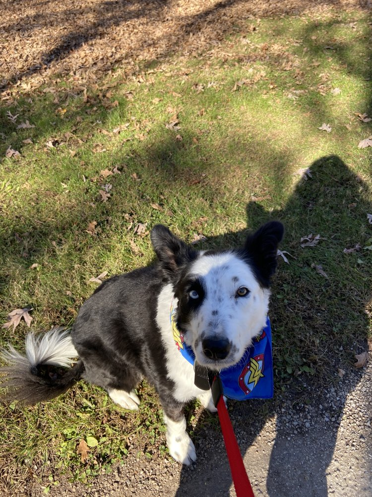 Angel Paws Pet Grooming & Pet Sitting: 900 S Mattis Ave, Champaign, IL