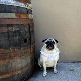 Masse's Pudgy Pugs - 36 Photos & 12 Reviews - Pet Adoption