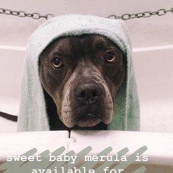 Green bulldog dog wash and spa 33 photos 43 reviews pet photo of green bulldog dog wash and spa mesa az united states solutioingenieria Choice Image