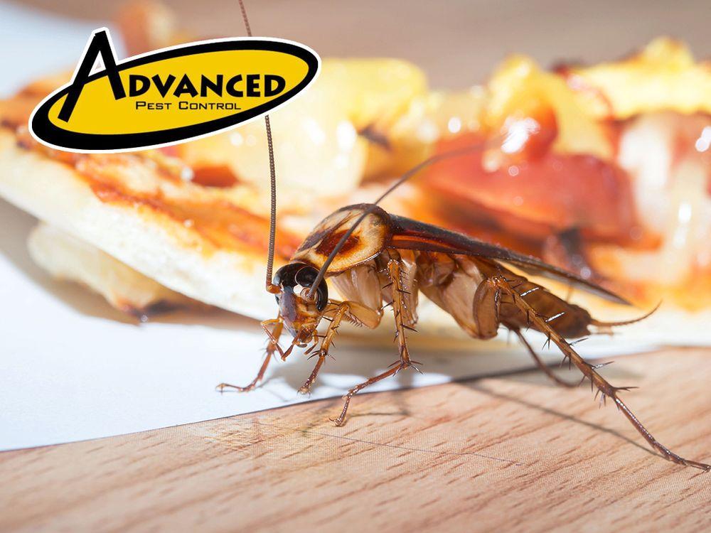 Advanced Pest Control: 601 Hobson Ave, Hot Springs, AR
