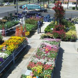 Photo Of Parkview Nursery Riverside Ca United States Great Selection