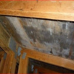 Photo Of Portland Mold Solutions Most Up To Date Removal Gladstone Or