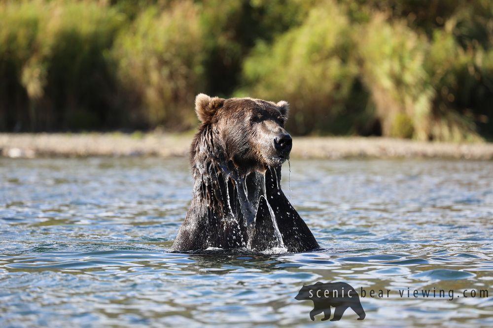 Scenic Bear Viewing: 3636 Faa Rd, Homer, AK