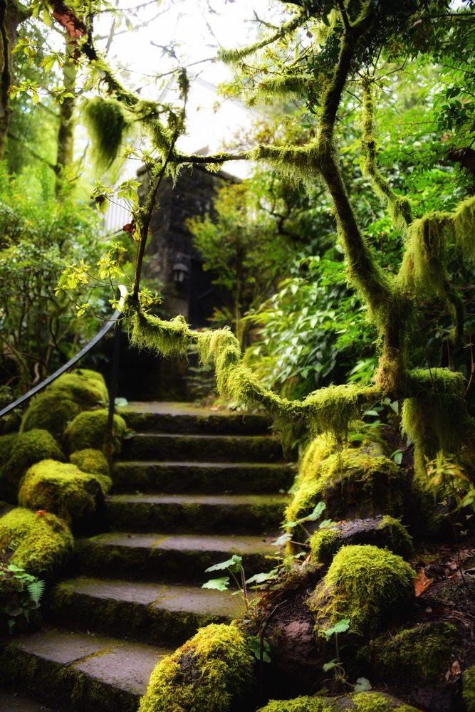 Leach Botanical Garden: 6704 SE 122nd Ave, Portland, OR