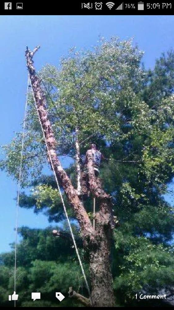 JB Tree Service: 35 Glastonbury Ct, Lake Saint Louis, MO