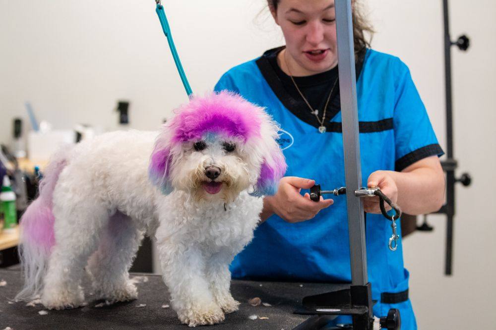 Canine Divine Spa: 4855 Goldstar Dr, Blaine, WA