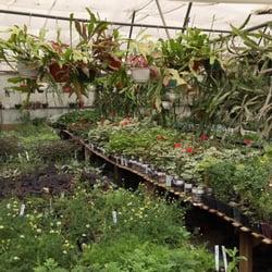 Al S Pine Garden Nursery