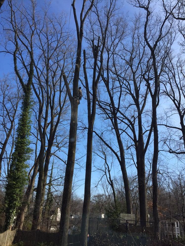 Shifflett Tree Service: Derwood, MD