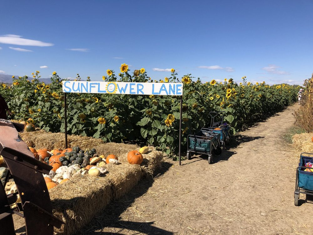 The Bartels Farm Pumpkin Patch: 3424 E Douglas Rd, Fort Collins, CO