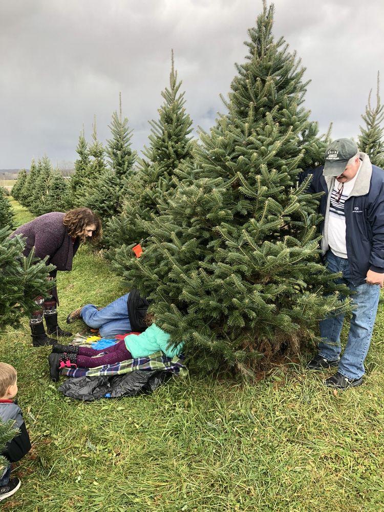 Alexander Tree Farm: 471 Township Rd 1500, Ashland, OH