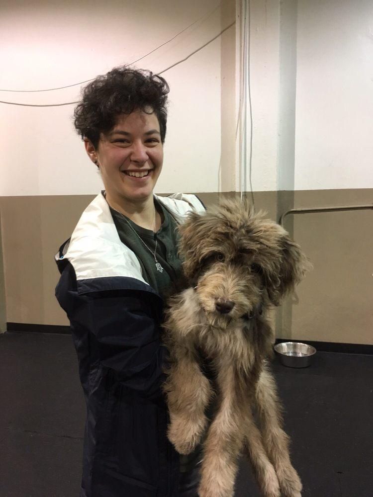 Seattle Dog Training Yelp