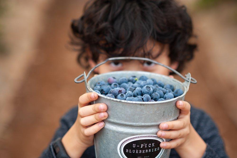U-Pick Blueberries: 3665 Dominion Rd, Santa Maria, CA