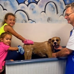 Muddy mutts 24 photos 18 reviews pet groomers 339 w harrison photo of muddy mutts new orleans la united states solutioingenieria Choice Image