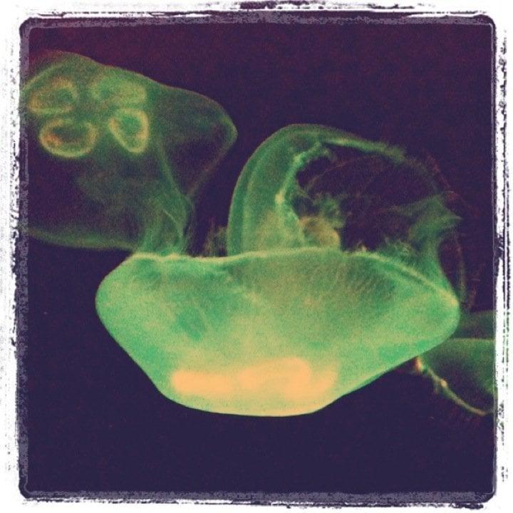 The Living Planet Aquarium, Salt Lake City, Utah - Yelp