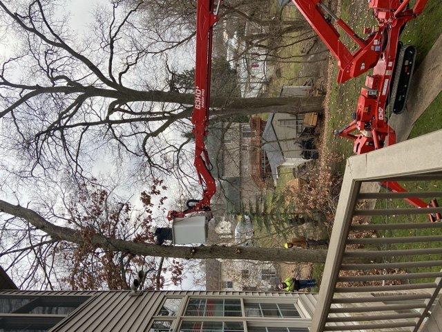 Ronald's Tree Service: 9337 White Pine Ct, Linden, MI