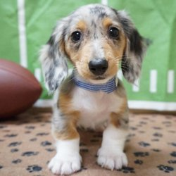 Pets in Racine - Yelp