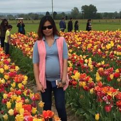 Holland America Bulb Farms Photos Florists S Pekin - Holland tulip festival