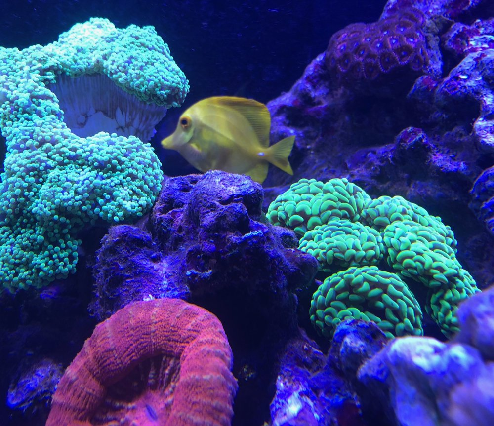 Cuttle Fish And Corals: 6363 SW Capitol Hwy, Portland, OR