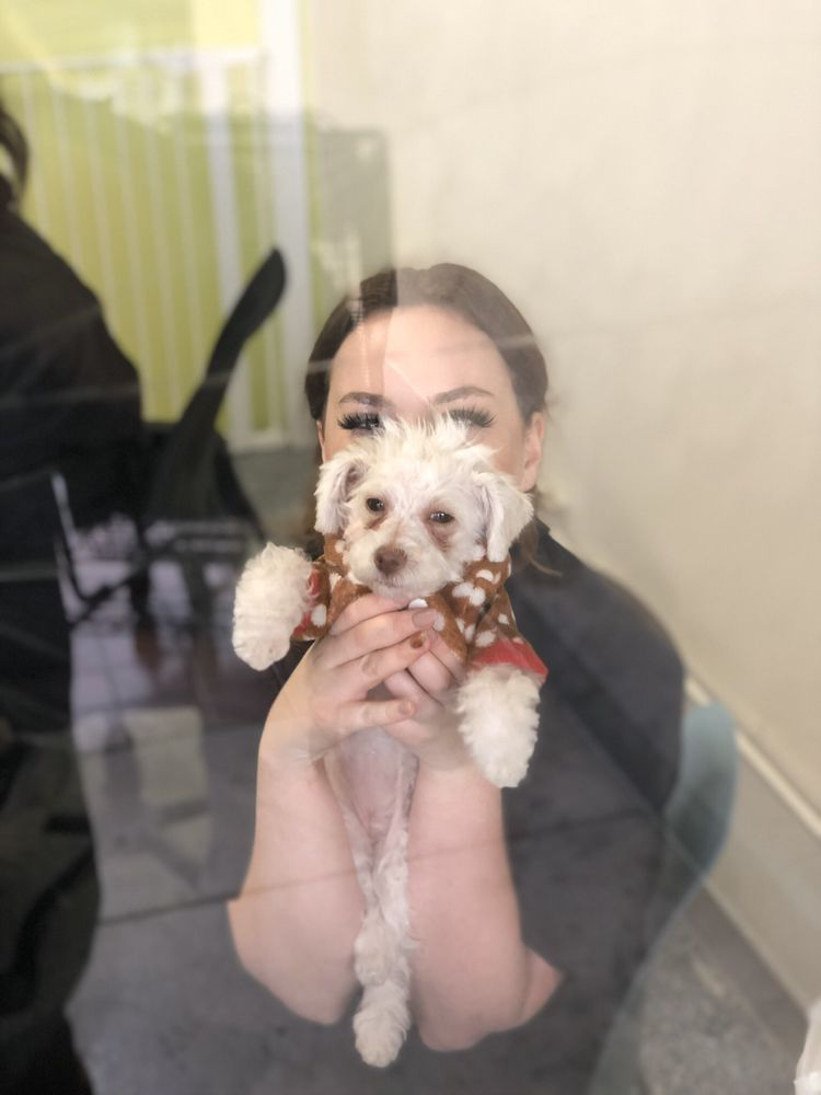Sydnee's Pet Grooming Mission Viejo