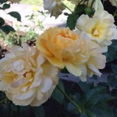 International World Peace Rose Gardens 249 Photos 21 Reviews Community Service Non Profit