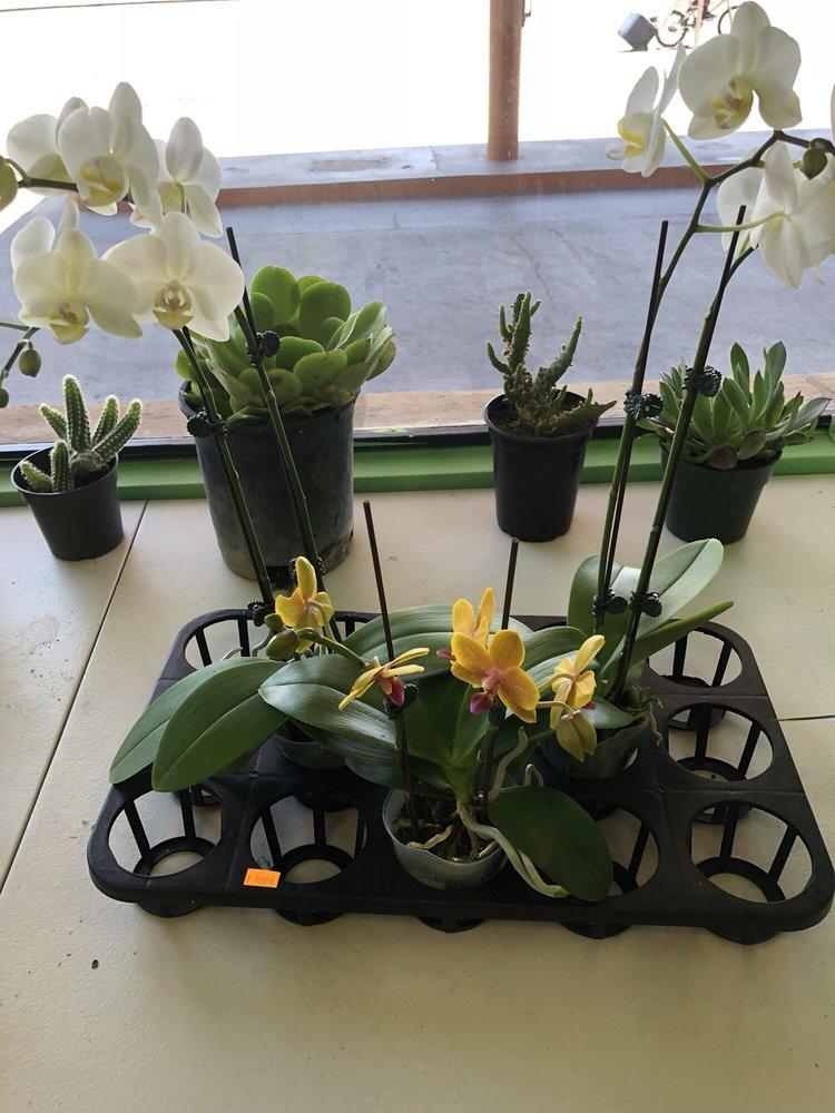 The Elegant Orchid