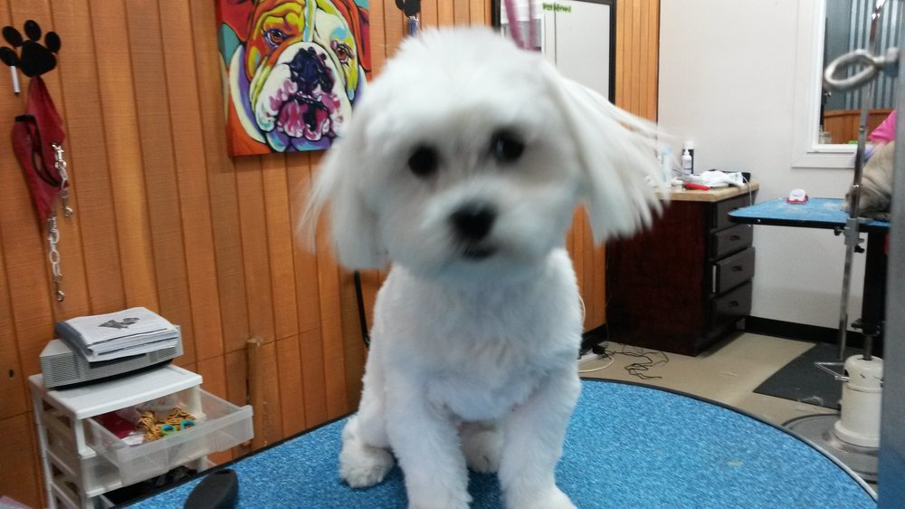 Forney Pet Spa: 10308 US Hwy 80, Forney, TX