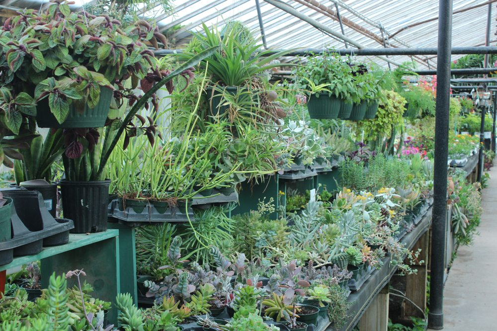 Plant Kingdom Greenhouse Outlets: 3640 S Topeka St, Wichita, KS