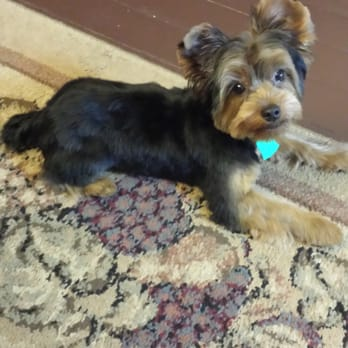 Rose Glen North Dakota ⁓ Try These Yorkie Puppies In