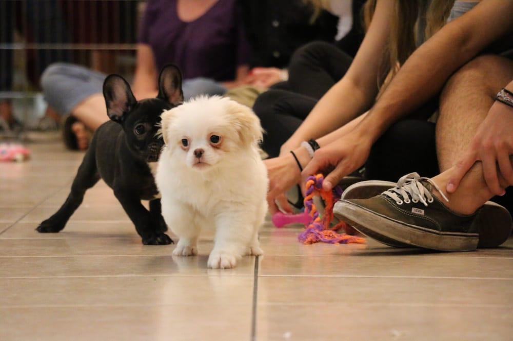 Puppies N Love