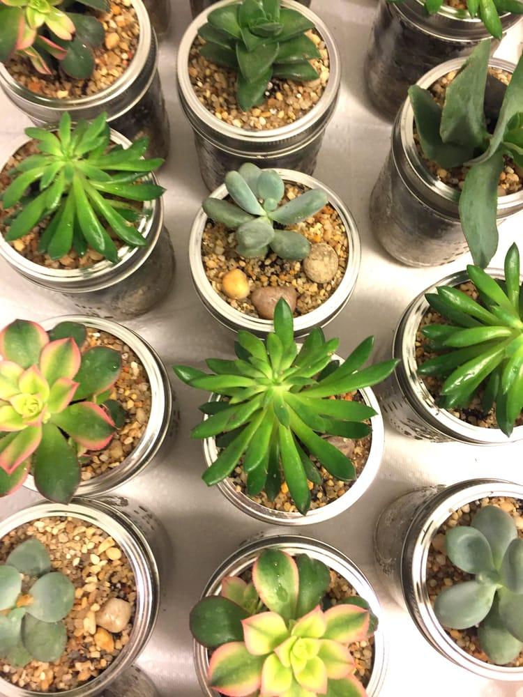 C J Cook's Discount Garden Center: 2200 State Rd, Bensalem, PA