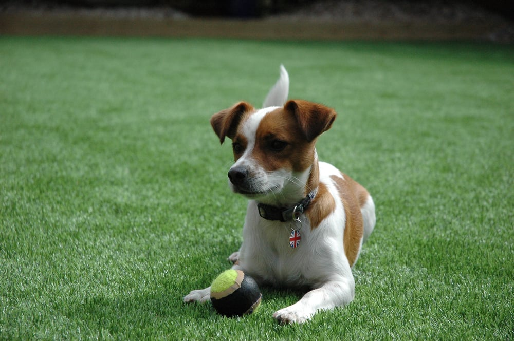 Dogs Friendly Turf Is The Solution Yelp