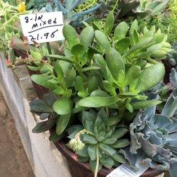 Nurseries Gardening In Pensacola Yelp