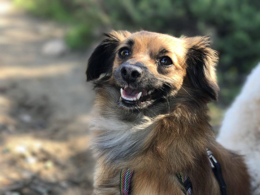 LA Dog Behaviorist
