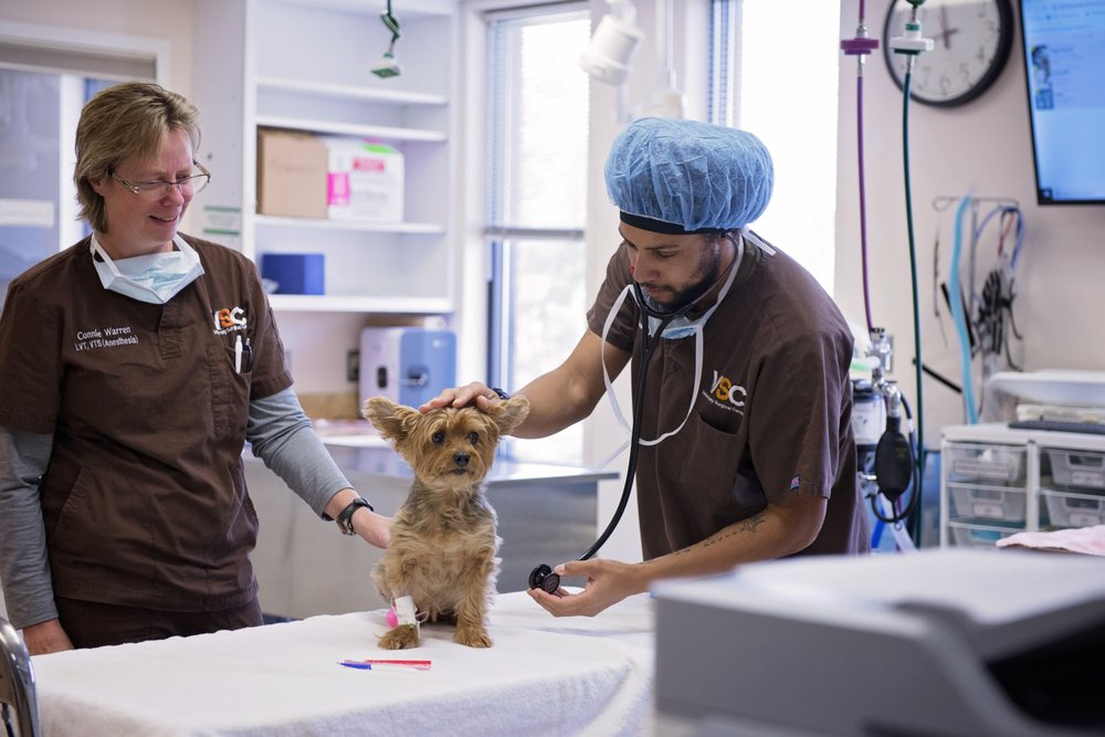 Veterinary Surgical Centers