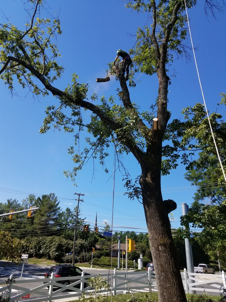 Timber Works Tree Care: 529 Rivermont Dr, Front Royal, VA