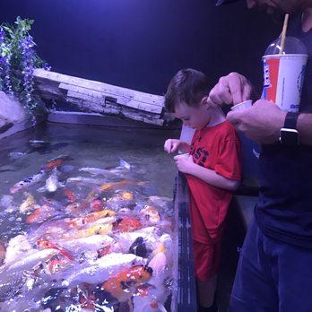 San Antonio Aquarium 429 Photos Amp 204 Reviews